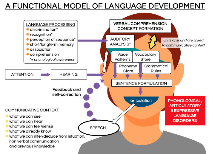 A FUNCTIONAL MODEL OF LANGUAGE DEVELOPMENT